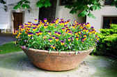 Yellow and violet heartseases in ceramic pot — Stock Photo