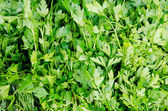 Stand with frest green parsley at market — Stock Photo