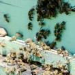 Group of bees entering the beehiv — Stock Photo