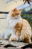 Big orange cat — Stock Photo