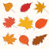 Set of autumn doodle leaves — Stock Vector