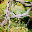 Twisted driftwood in the grass — Stock Photo