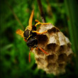 Wasp, summer, honeycomb — Stock Photo #34441267