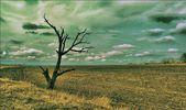 Cabaña solitaria en el campo. árbol solitario. bandada de pájaros. globo. ciudad fantasma. — Foto de Stock