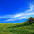 Lone bush on green hills — Stock Photo #34485239