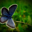 Butterflies. summer — Stock Photo #34523179