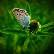 Butterflies. summer — Stock Photo #34523211