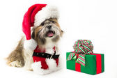 Doggy Santa with a Present — Stock Photo
