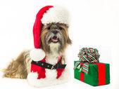 Perro Santa con un regalo — Foto de Stock