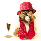Party Dog Eyes Kibble Cocktail — Stock Photo