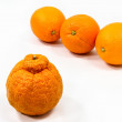 Orange Oddity - Stock Photo