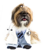 Dog as A Doctor — Stock Photo