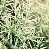 Herb — Stock Photo