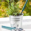 Lavender in metal flowerpot and garden tools against autumn leaves - Stock Photo