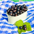 Bowl with black currant on napkin — Stock Photo