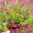 Cup of herbal tea in miiddle of thyme herbs — Stock Photo