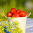 Tomatoes and dill — Stock Photo