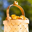 Basket of chanterelle on wooden background — Stock Photo