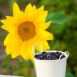 Stock Photo: Sunflower seeds in bucket and sunflower
