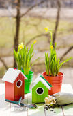 Bird house and Narcissus in pots, shovel and seeds in spring — Stock Photo