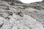 Stone desert in the Austrian Alps, Europe — Stock fotografie