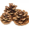 Three pinecones on white background — Stock Photo