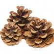 Stock Photo: Three pinecones on white background