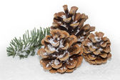 Pinecones with fir twig and snow, large DOF — Stock Photo