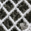 Fence covered with hoarfrost - Stock Photo
