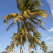 Palm tree in the wind - Stock Photo