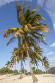 Palm tree in the wind — Stock Photo
