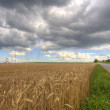 Barley field with country road and village in Bavaria, Germany — Stock Photo #29675715