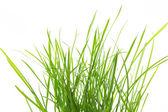 Fresh grass isolated on white background — Stock Photo