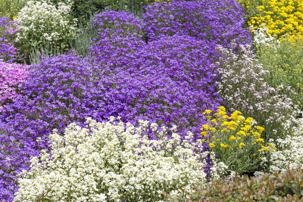 Plantas de cobertura do solo na primavera fotografias de stock haraldmuc 45117163 - Couvre sol vivace ...