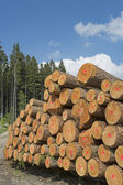 Wood industry in Germany — Stock Photo