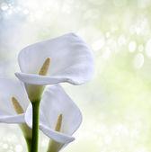 Background spring — Stock Photo