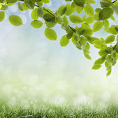 Natural green background — Stock Photo