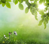 Natural spring green background — Stock Photo