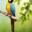 Macaw parrot — Stock Photo #12730766