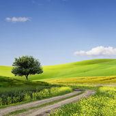 Fältet, träd och blå himmel — Stockfoto
