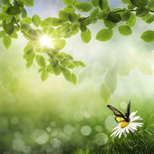 Butterfly, Fresh Spring bokeh background — Stock Photo