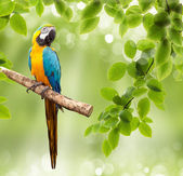 Macaw parrot on a tree — Stock Photo