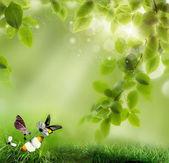 Tre fjärilar på blommor. mot bakgrund av en fjäder — Stockfoto