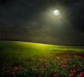 łąka z kwiatami i księżyc — Zdjęcie stockowe