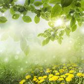 春天的背景。在一片草地蒲公英 — 图库照片
