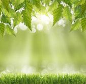 Streszczenie tło wiosna — Zdjęcie stockowe