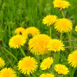 Dandelions — Stock Photo #24331157
