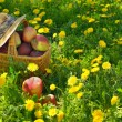 Apples in the Basket — Stock Photo #24578335