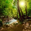 Stock Photo: The mountain river in the forest