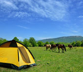 Tent and horses — Stock Photo